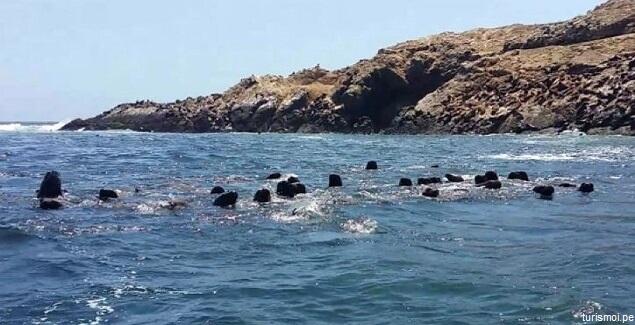 Viaje a las Islas Guañape y descubra su riqueza natural