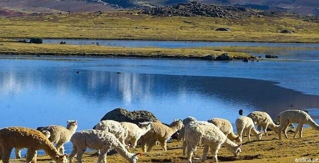 Laguna de Choclococha en la ruta de los espejos de Huancavelica