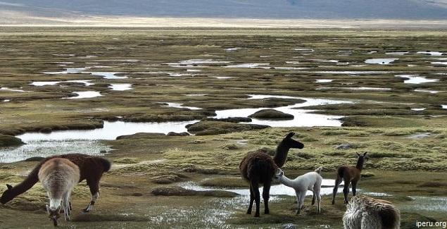 Reserva Nacional de Salinas y Aguada Blanca en Arequipa