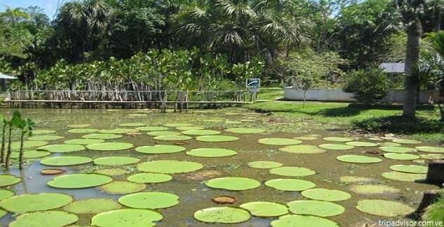 Conozca el Fundo Pedrito y su gran criadero de especies del Amazonas