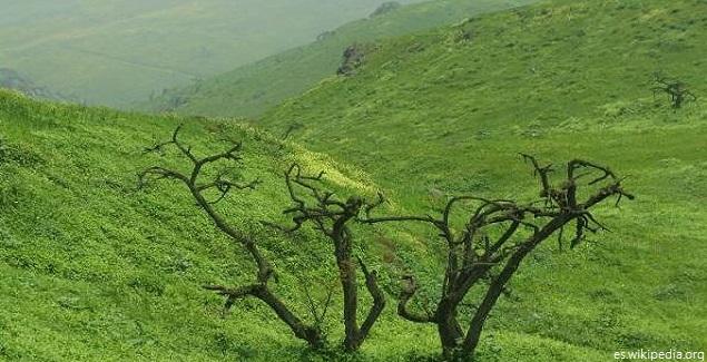 La Reserva Nacional de Lachay, un oasis de neblina