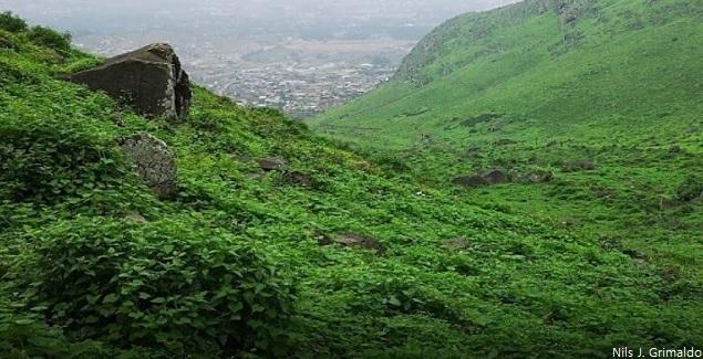 Las Lomas de Lúcumo, un atractivo ecosistema muy cerca de Lima