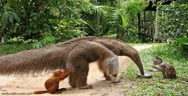 Pilpintuwasi, un singular albergue de animales en la Amazonía