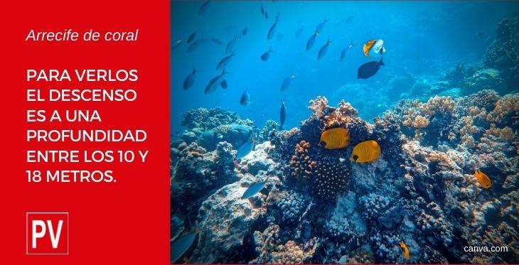 Imagen de arrecife de coral en el post sobre bucear en Perú, de Perú En Vídeos