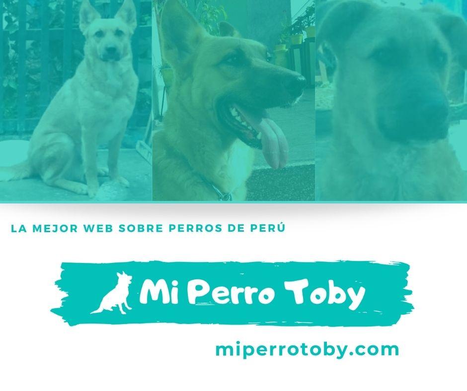 Web Mi Perro Toby