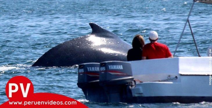 Turistas en bote en la actividad de avistamiento de ballenas en Perú